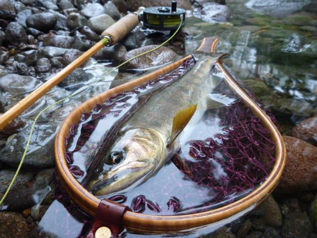 フライフィッシングで釣ったアマゴ